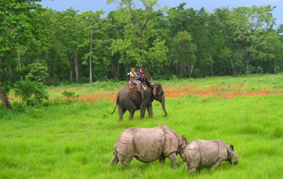 Trip to Chitwan National Park and Pokhara City